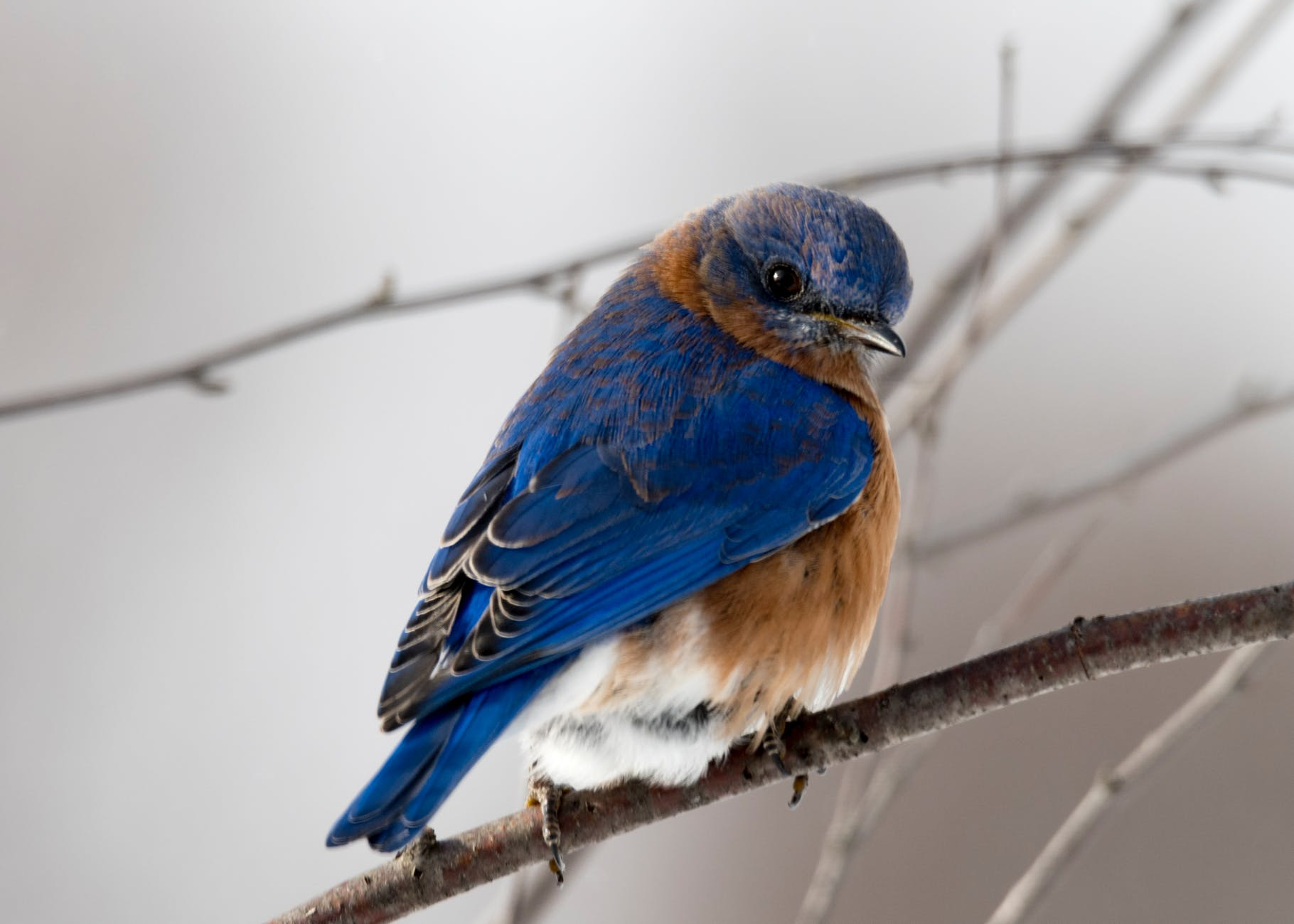 photography of small blue and brown bird